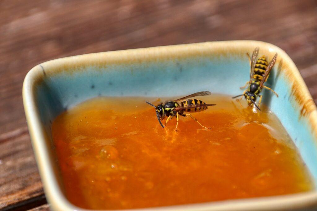 Die klassischen Symptome eines Wespenstichs sind Rötungen, Schwellungen und schmerzhafter Juckreiz, selten auch Fieber.